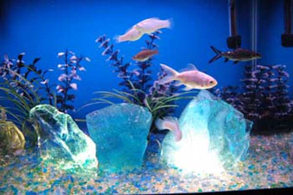 Aquarium Glass Aquarium Glass Uses And Gallery